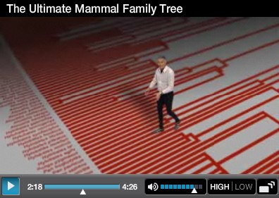 Mammal+Video.jpg