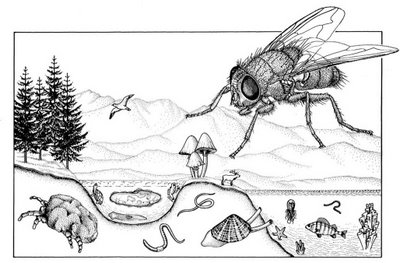 Species-scape.jpg