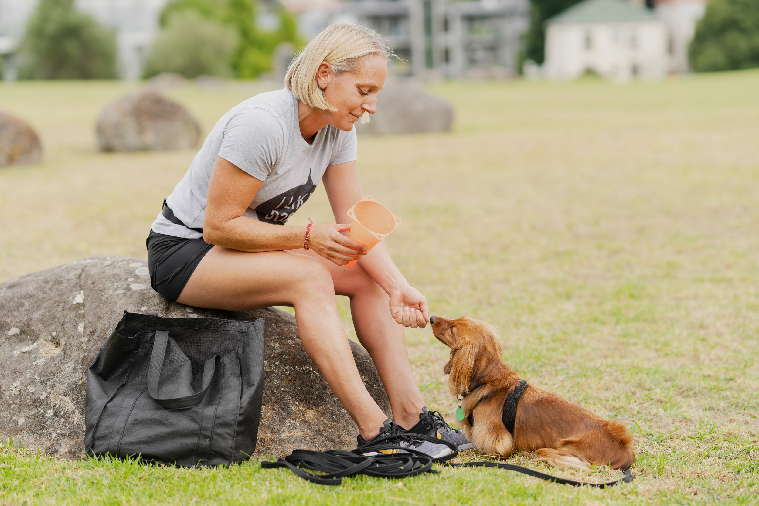Dog training in park fun