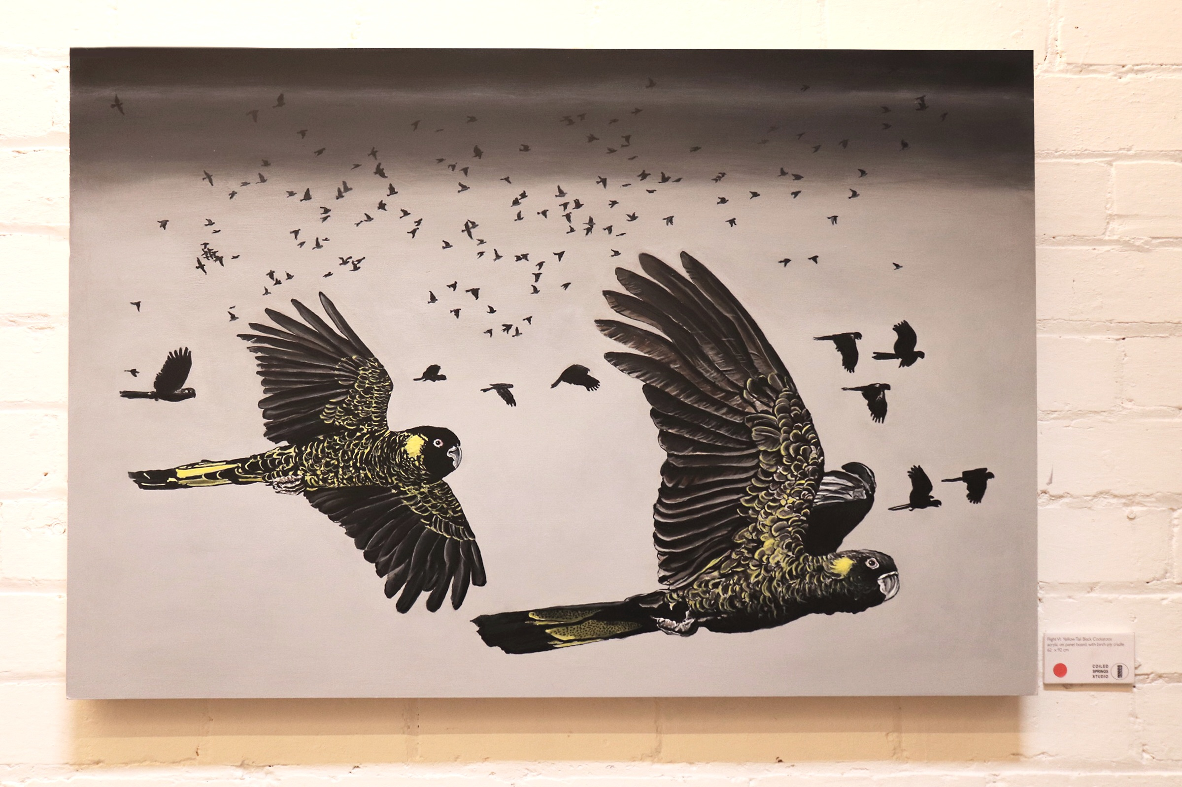Flight VI: Yellow Tail Black Cockatoos