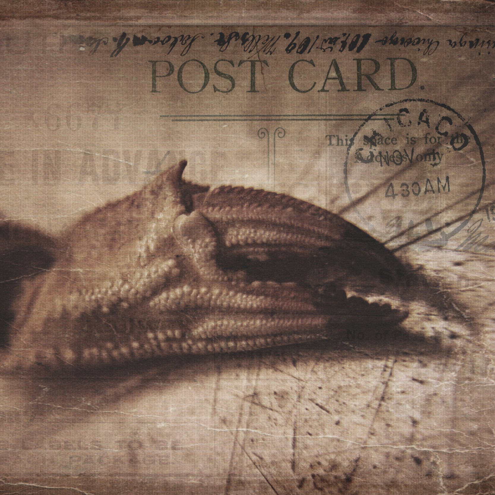 Postcards - photo and design Lizzie Oxby