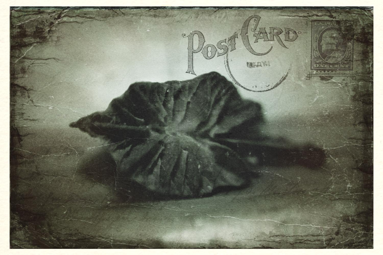 Postcard 02: Precious Things