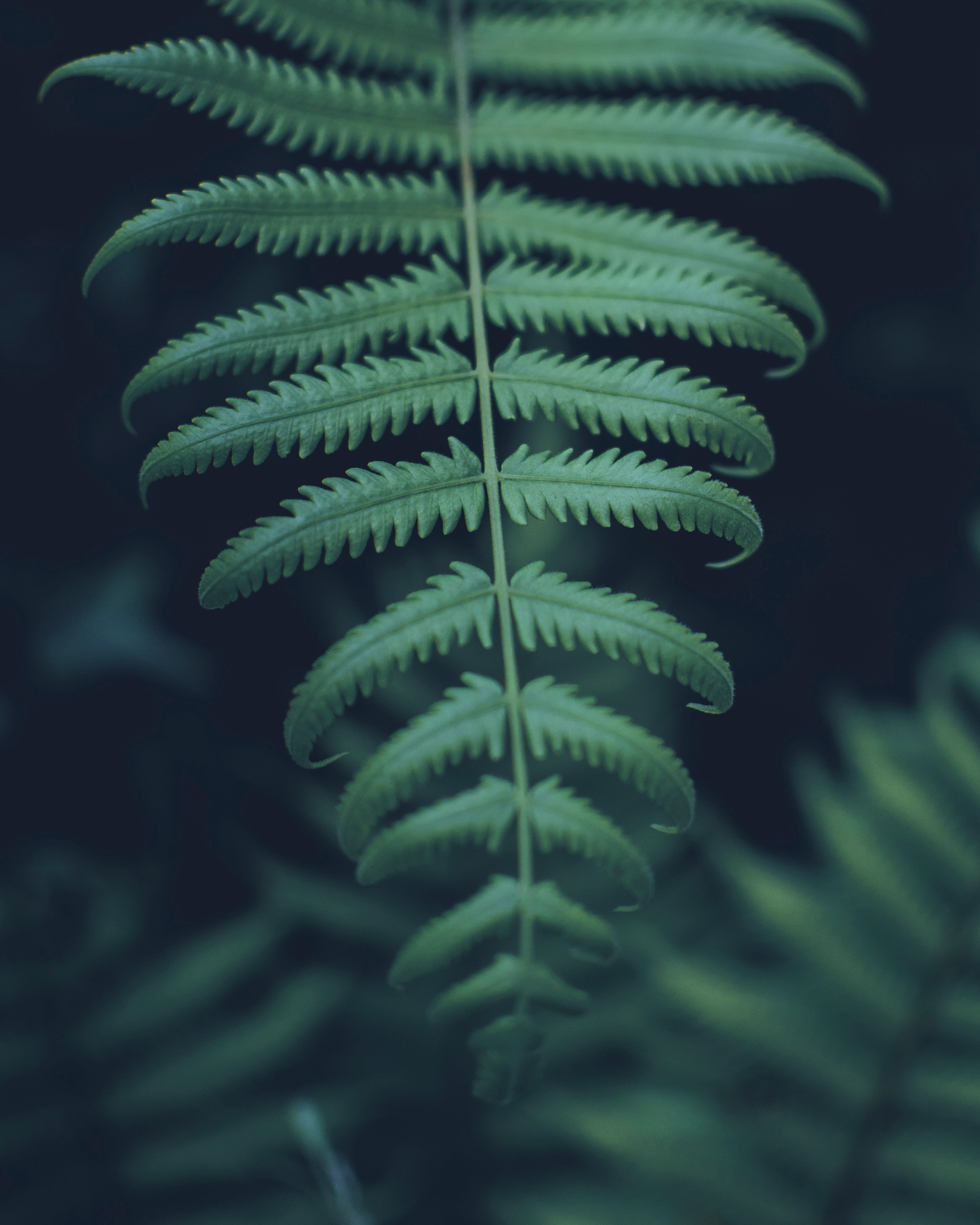 close-up-fern-fern-leaves-1721554.jpg