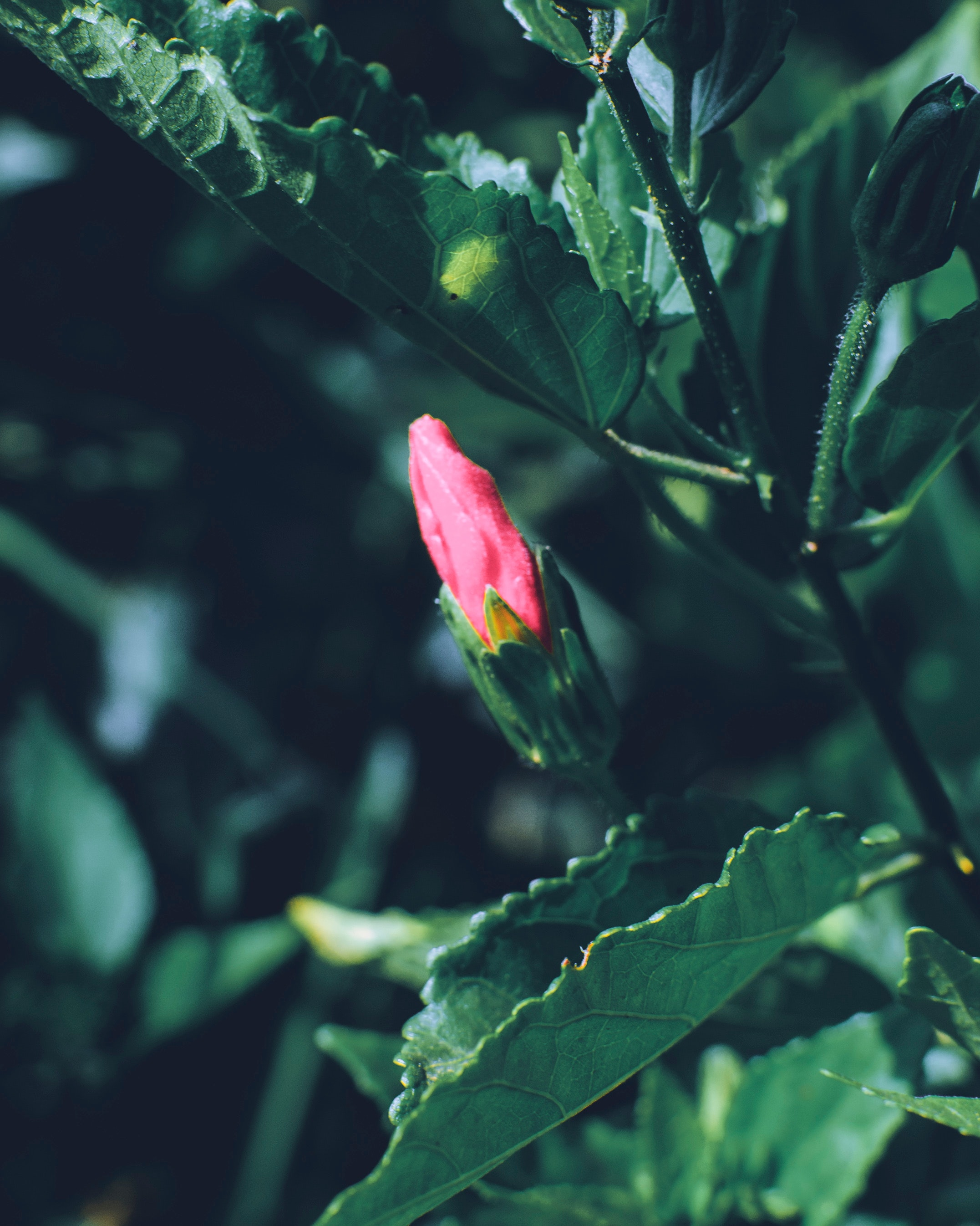 beautiful-flower-big-leaf-bud-1721584.jpg