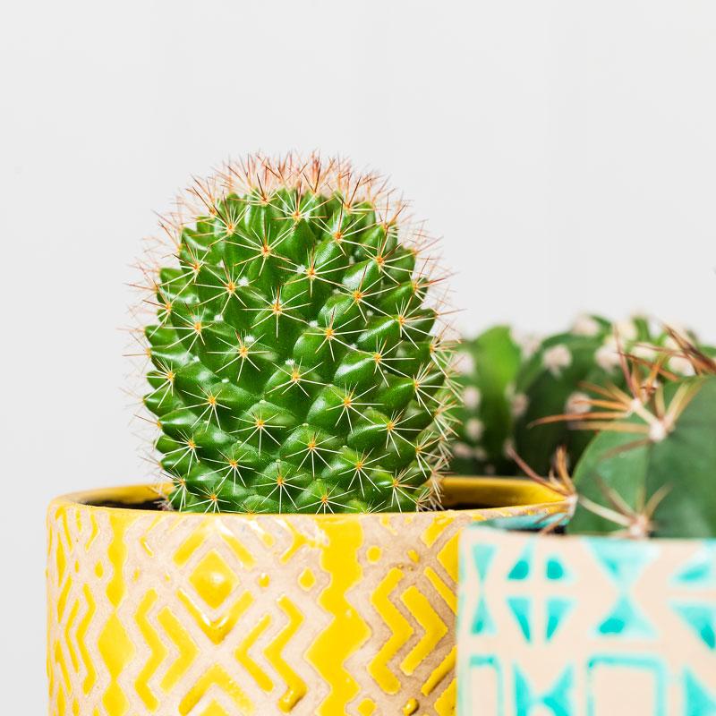 Arcade Flowers | Artisan Floristry | Ringwood Hampshire | Cactus in Glaze Pots | www.arcadeflowers.co.uk.jpg