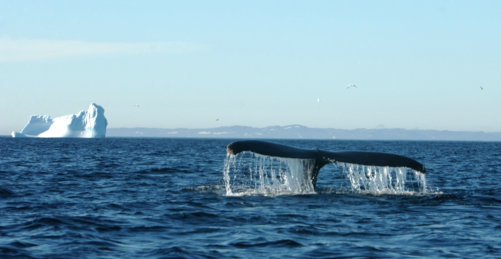 Whale tail and berg.jpg