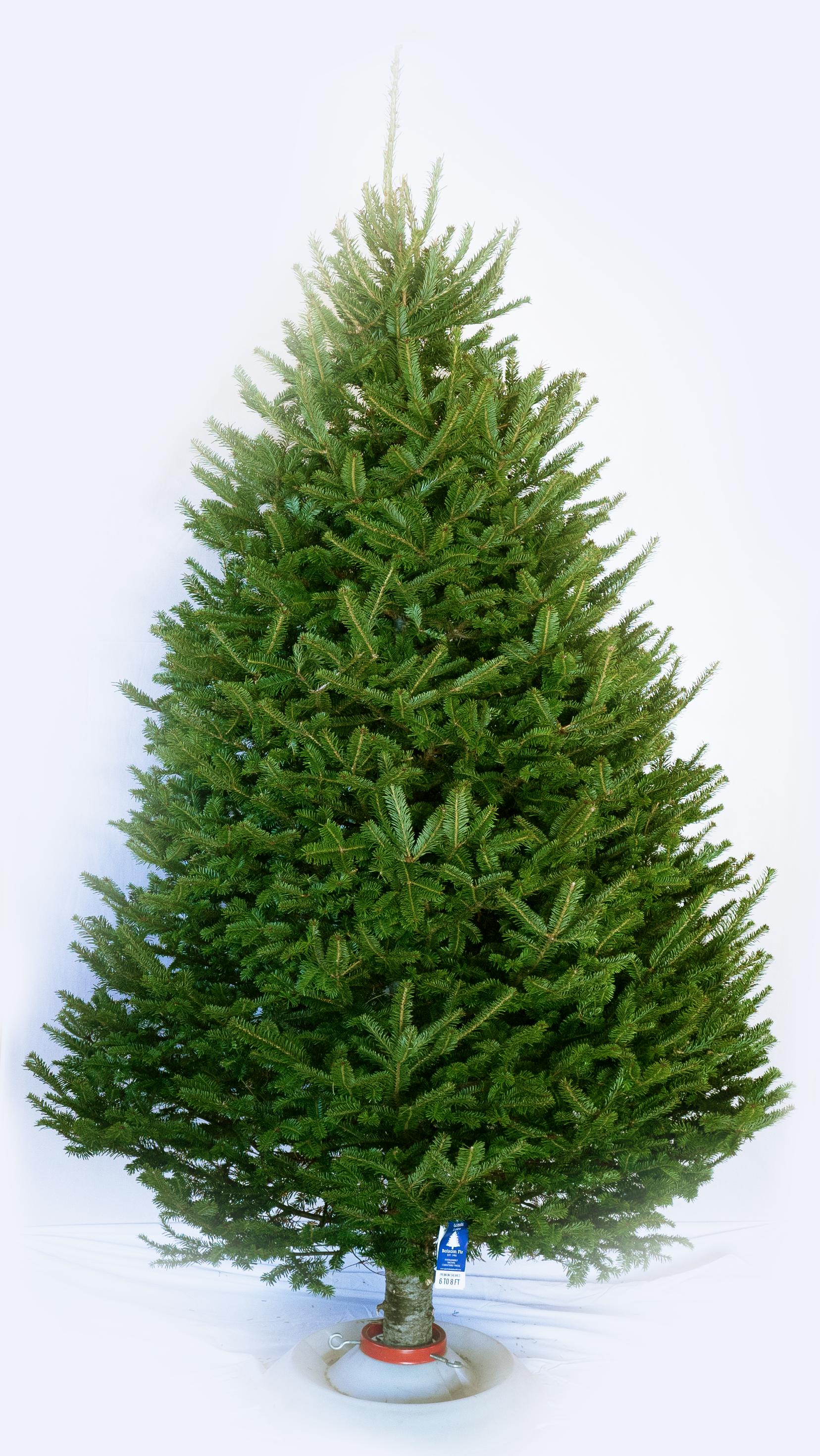 GL-Tree-Grades-2-Premium-1.png