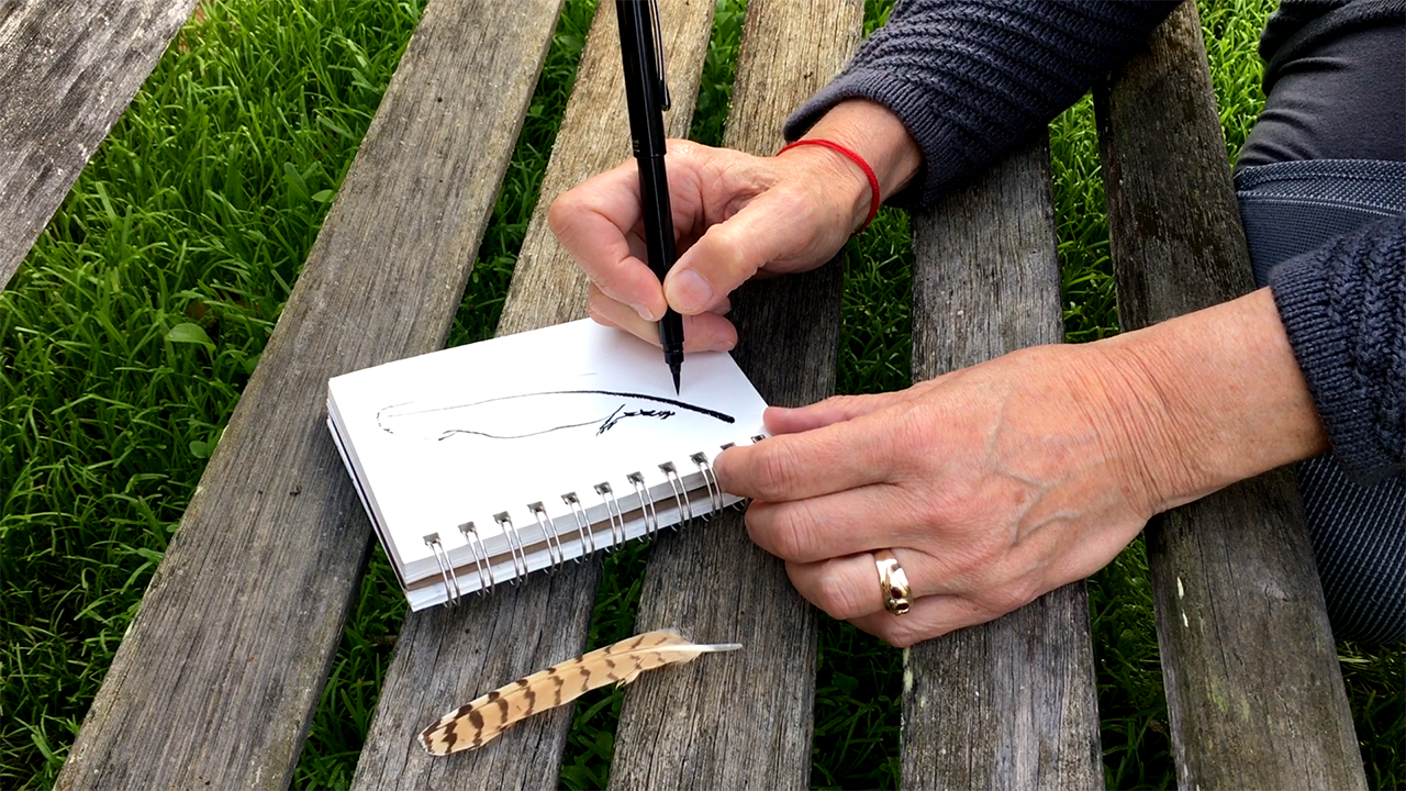 drawing a feather demo.png