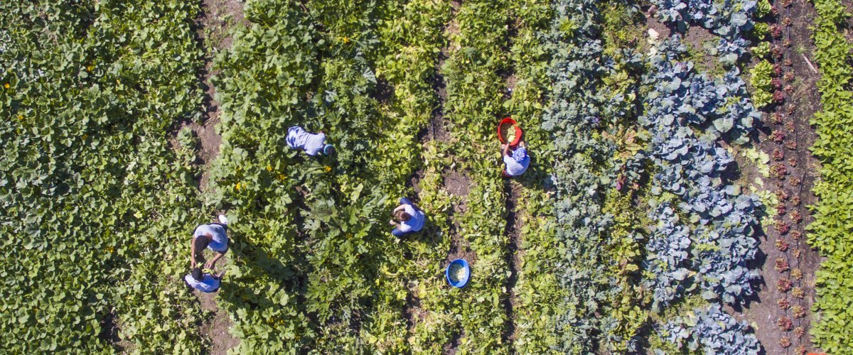 aerial-shot-of-farm-tools-credit-idea-kraft-1200x500.jpg