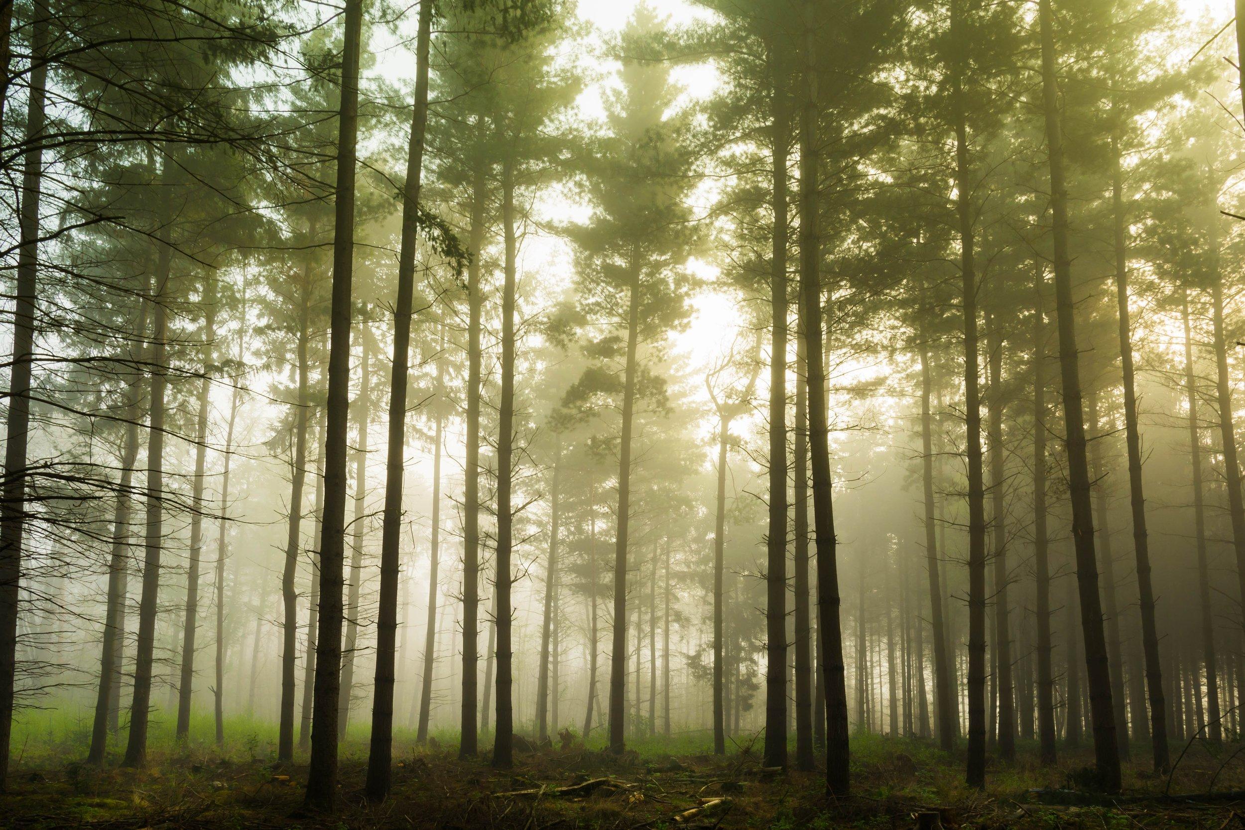 Silent Retreats Nashville | Dovehouse Ministries