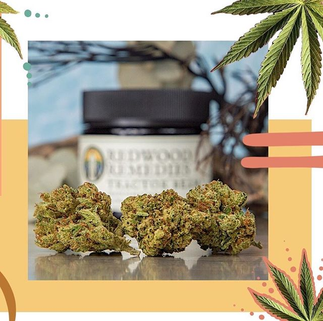 @emeraldexchangeca is participating with @thelmc707 at the Kind Bud Lounge at the @katewolfmusicfestival this weekend in Mendocino County! ✨ Be apart of the first official festival that's incorporating cannabis for sale and consumption for the first time in the county! . . Link to tickets are in bio! . . . . #music #festival #cannabiscommunity #cannabis #mendocino #history #sun #emeraldexchange #love #heart #nature