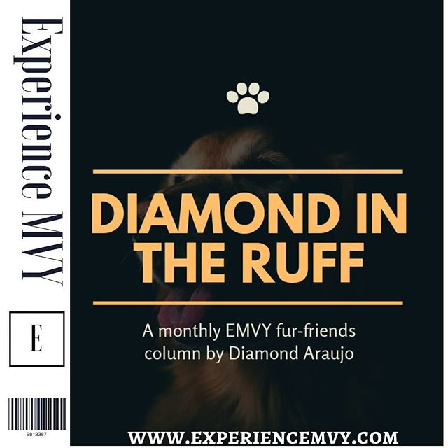 Diamond in The Ruff is a monthly column dedicated to Fur Friends! 🐕🐩 Author Diamond Araujo @dimenickelpenny shares with us tips for adoption instead of shopping. With local #marthasvineyard shelter information. Go check it out!  Magazine link in bio! 📖