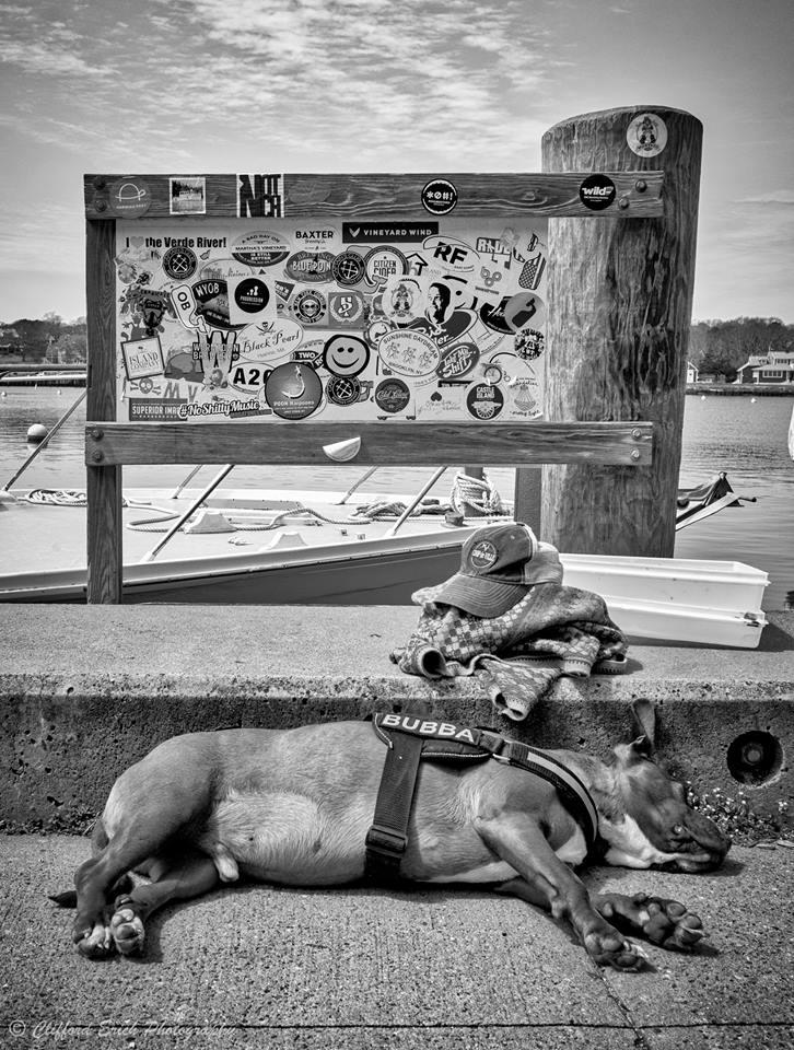 Dog Days 5.jpg