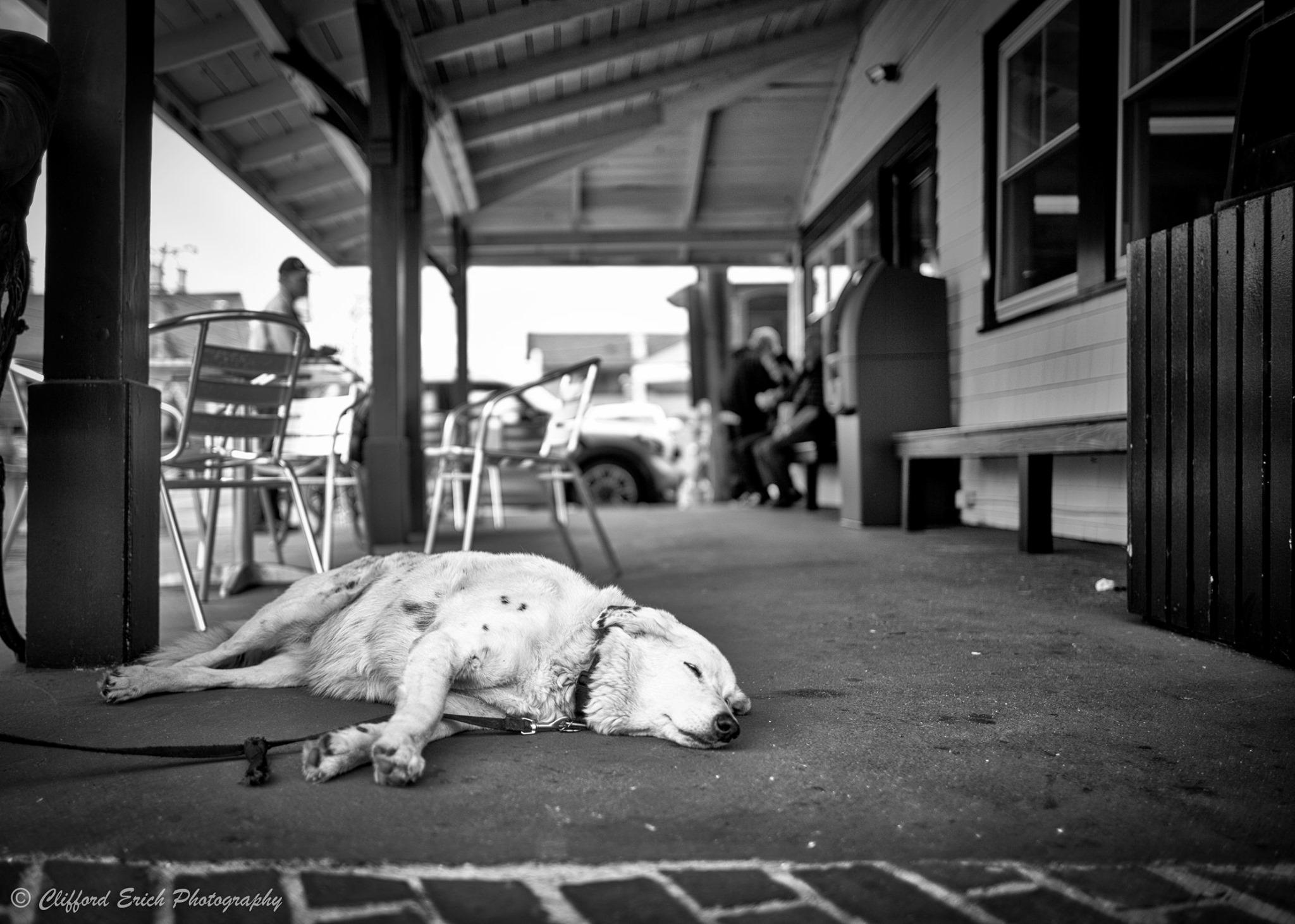 Dog Days 4.jpg