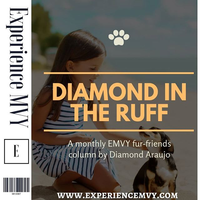 Diamond Araujo shares some great tips in her newest article on how to have a safe and wonderful summer on #marthasvineyard with our pups! 🐕🐩 Check it out here (link in bio): https://experiencemvy.com/people-places/2019/6/24/the-dog-days-of-summer