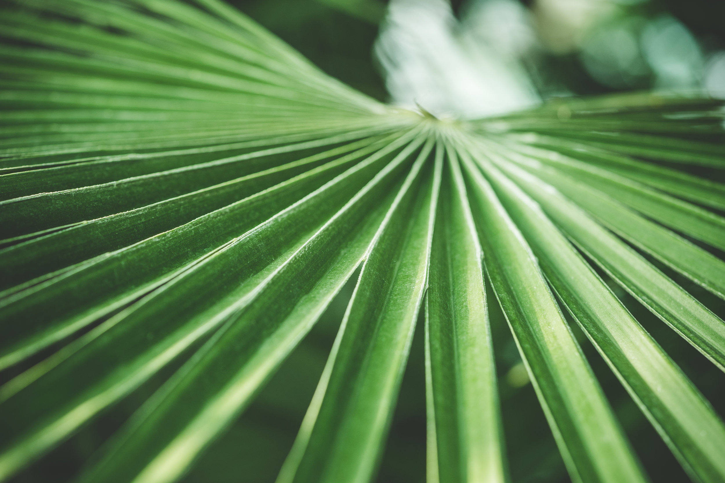 green-palm-tropical-plant-picjumbo-com.jpg