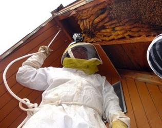 Hive-Removal2.jpg