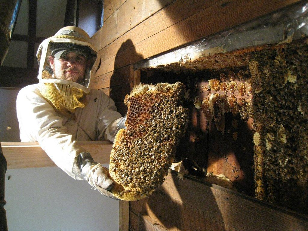 Hive-Removal1.jpg