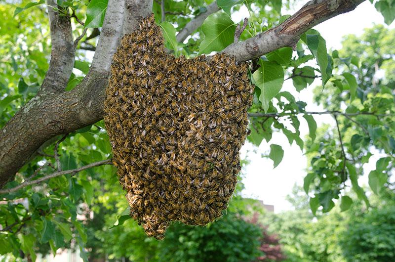 bee-swarm.jpg