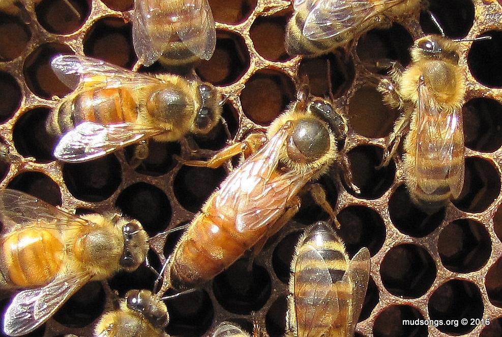 14-05-16-Queen-close-up.jpg