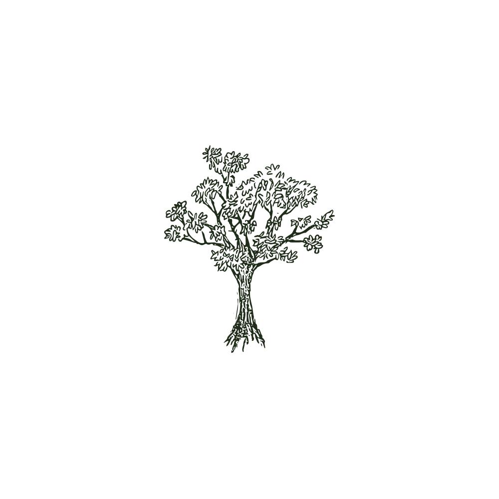 gifwalnuttree.jpg