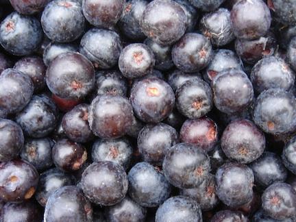 Aronia berries.jpg