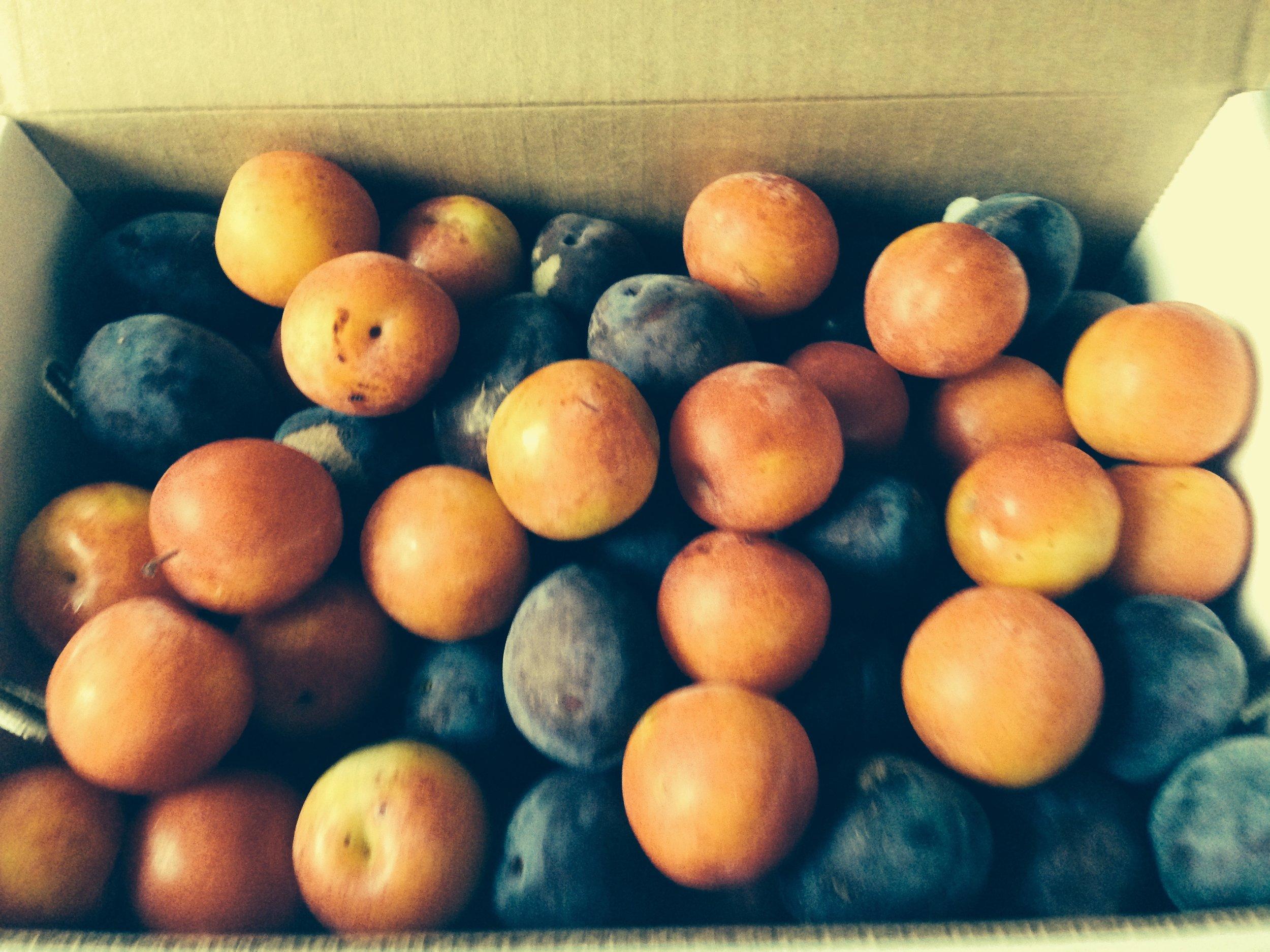 Assorted plum box.jpg