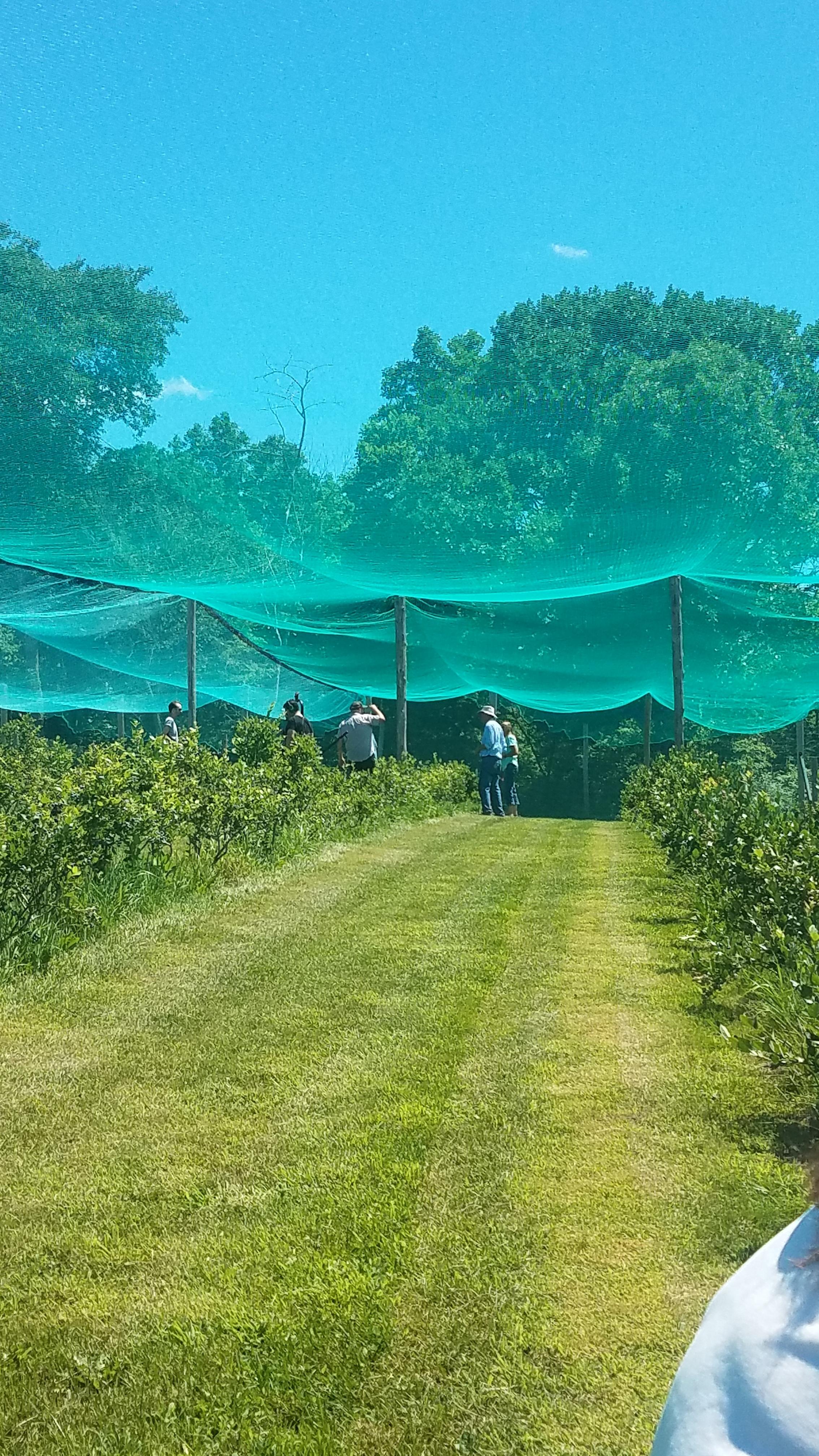 Overhead Netting from Inside the Netting.jpg