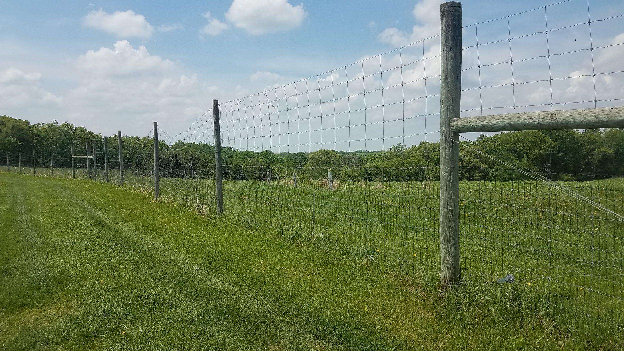 Deer fencing.jpg