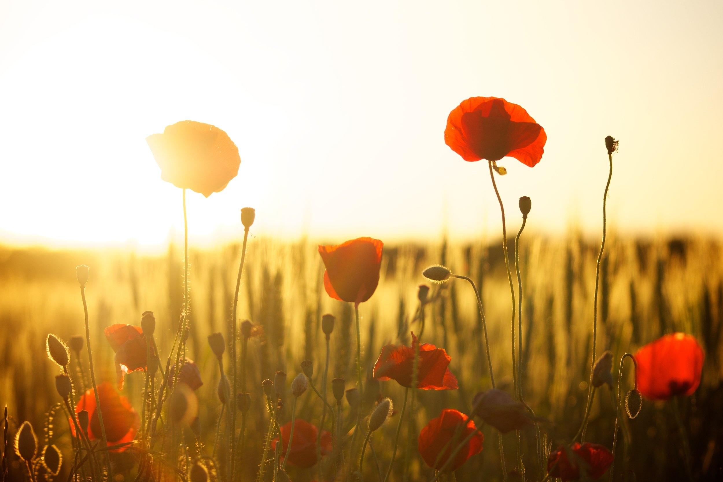 blossom+field.jpg