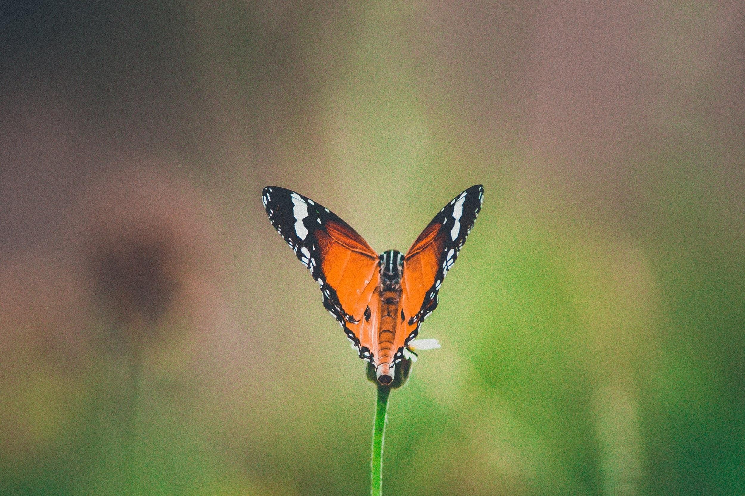 heart+butterfly.jpg