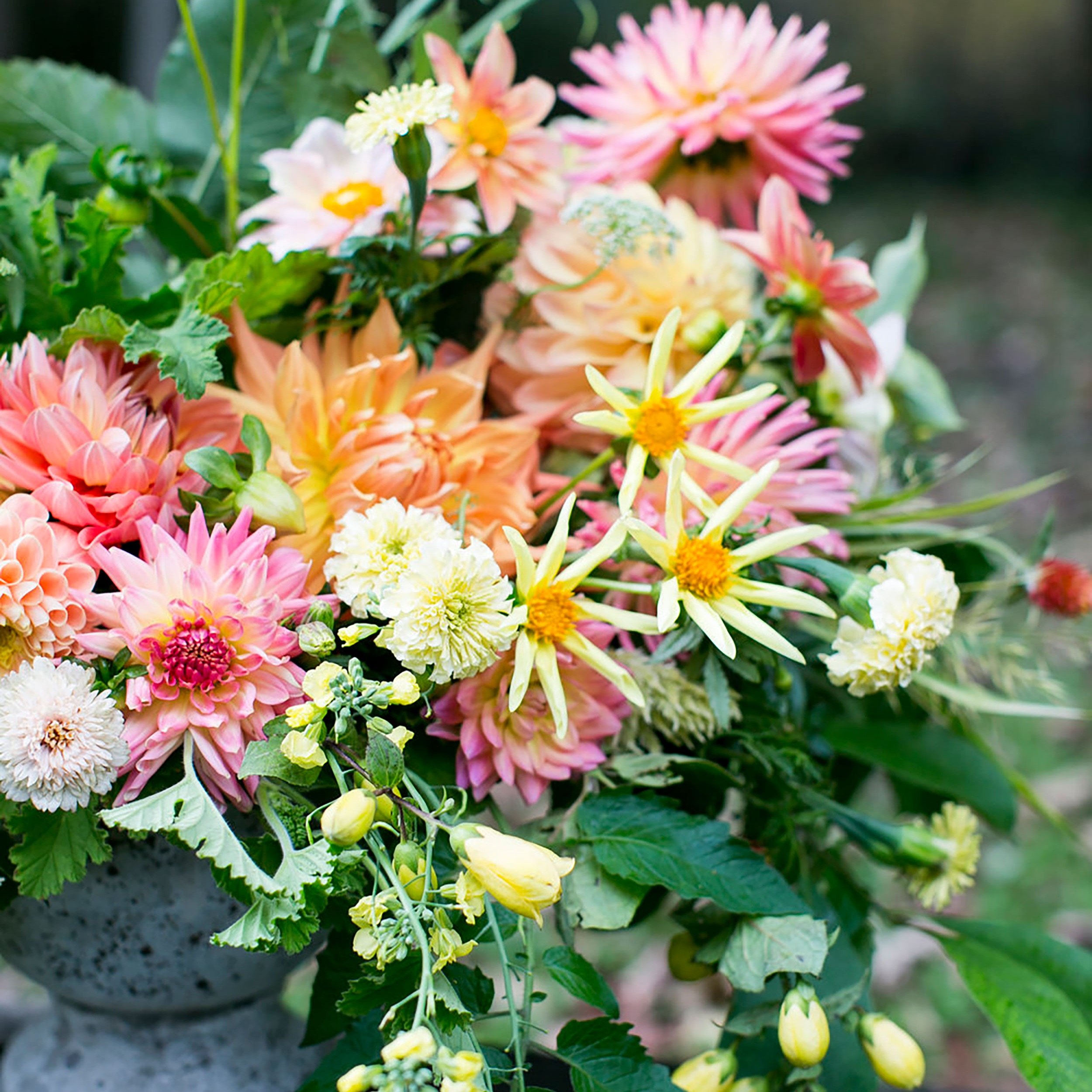 Dahlias Forever - Workshop Fee: $90TWO DATES: * SOLD OUT Sunday, September 15, 3pm- 5pmThursday, September 19, 6pm-8pm (date added!)Dahlia season is a special time of year at Two Pony Gardens and we don't want you to miss it! Begin this workshop with a tour from Two Pony Gardens dahlia expert extraordinaire, Lisa Ringer as she tours you through the heirloom dahlia gardens. Learn about the different dahlia varieties, select your favorites and get to the design studio for a dahlia crazy workshop led by Ladyfern designer Summer Badawi. You will learn to create stunning low centerpiece arrangements that are simply spilling in dahlias and other seasonal flowers & foliages from our farm.