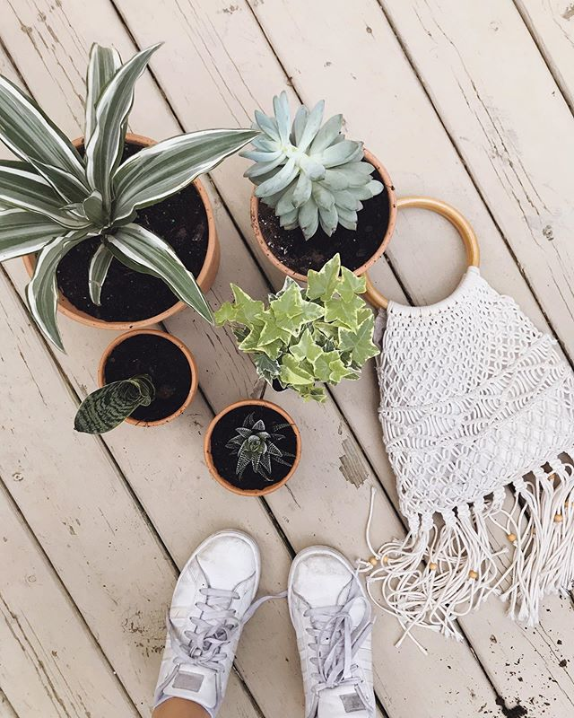 Repotting old plants and planting some new 🌿 excited for a fresh start this week after a long camping trip in Colorado with my fam! ✨ hope you guys had a great weekend:) expect to see some new goodies posted soon!