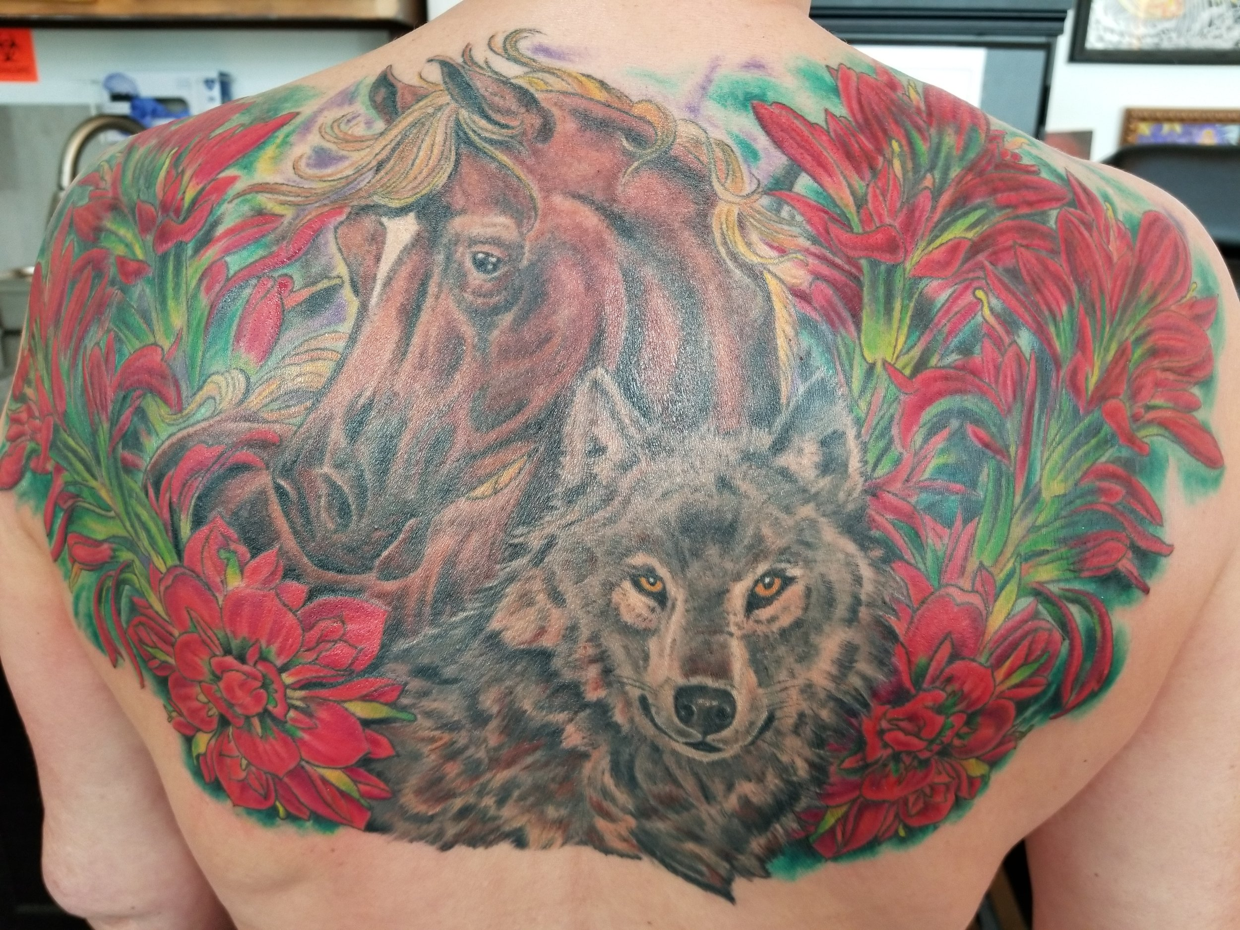 Horse, wolf and Indian paintbrush