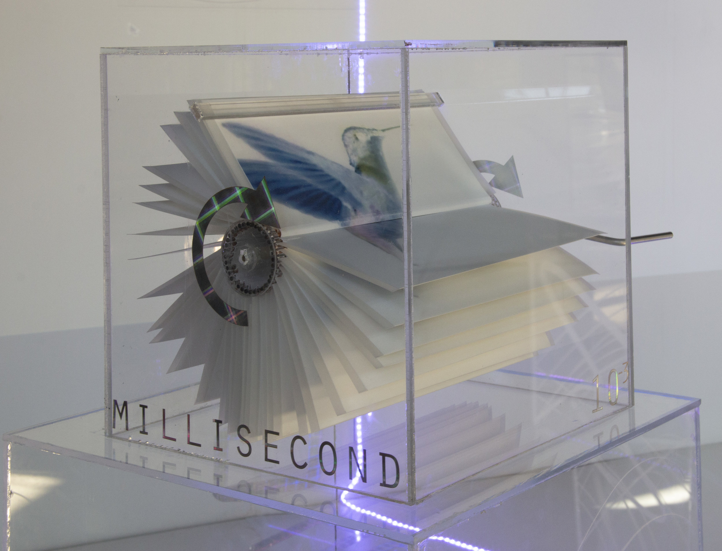 Milliseconds  How does a bird hover in place?