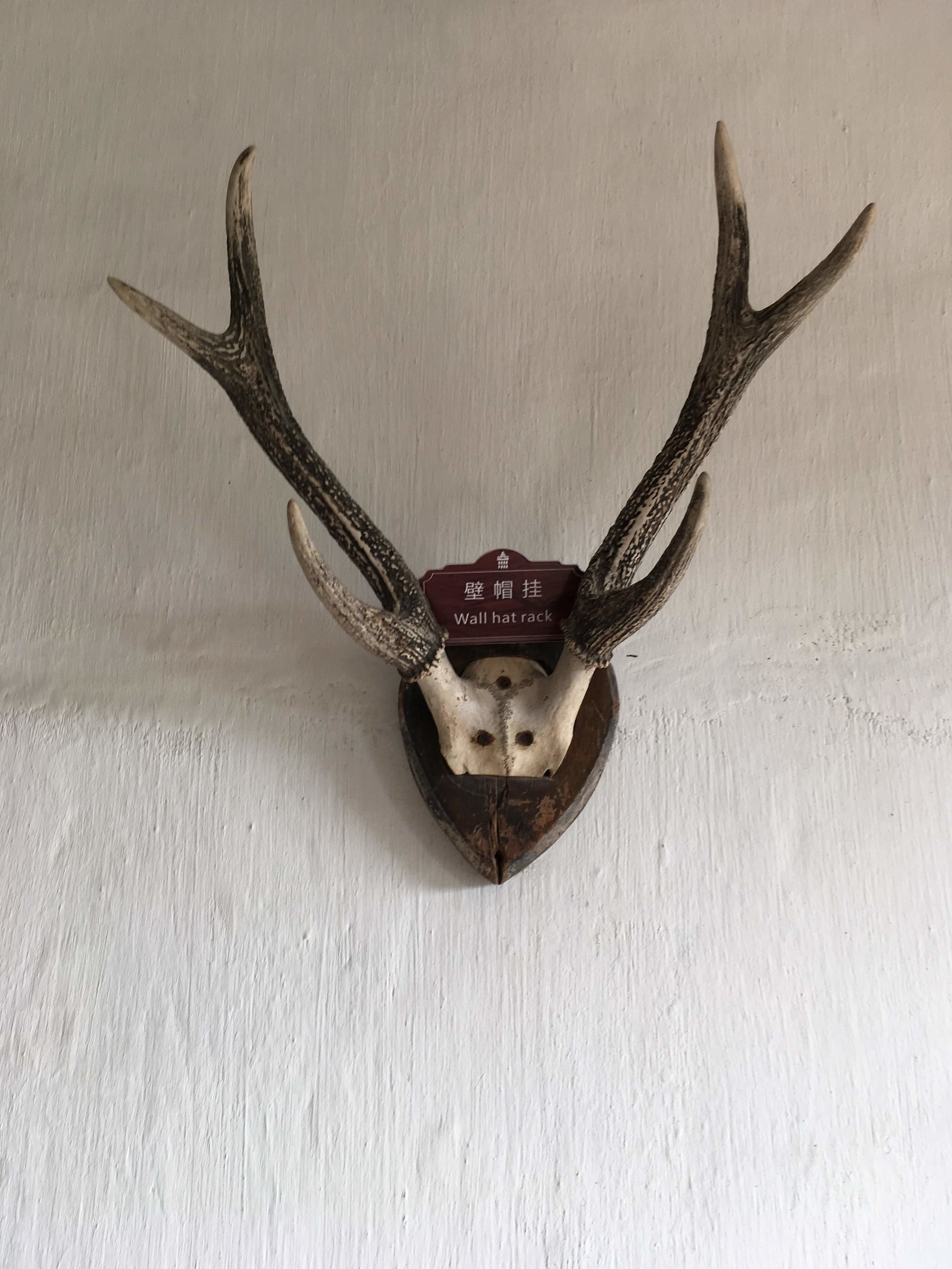 "Tagged as ""Wall Hat Rack.""  I think it might be elk."