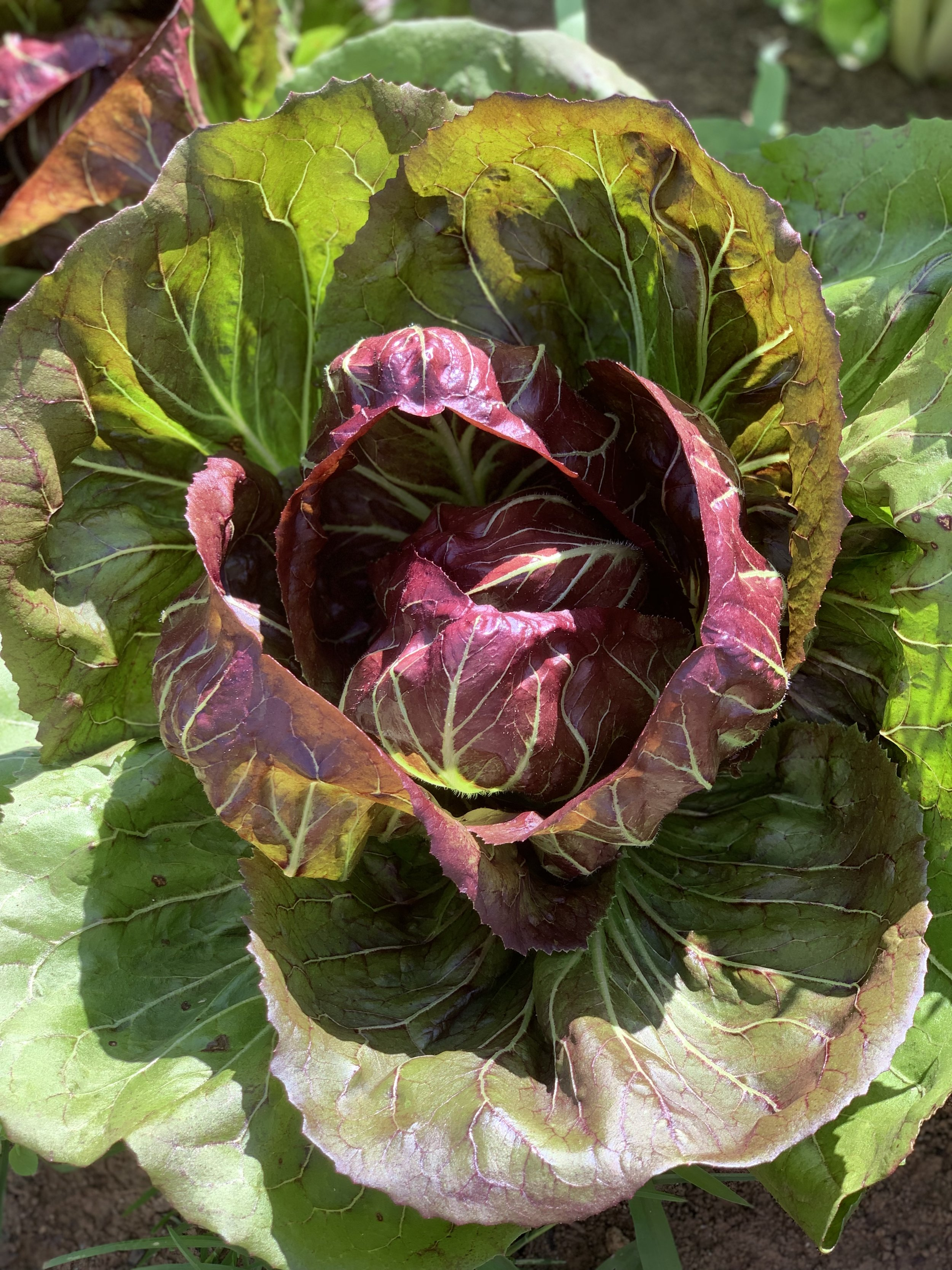 farm veg 2.jpg