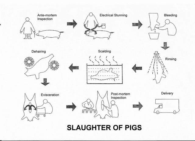 meat_pigflow_eng_640.jpg