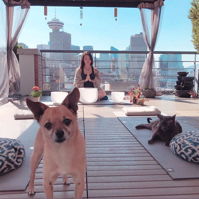 Welcome to our secret zen garden 🎋