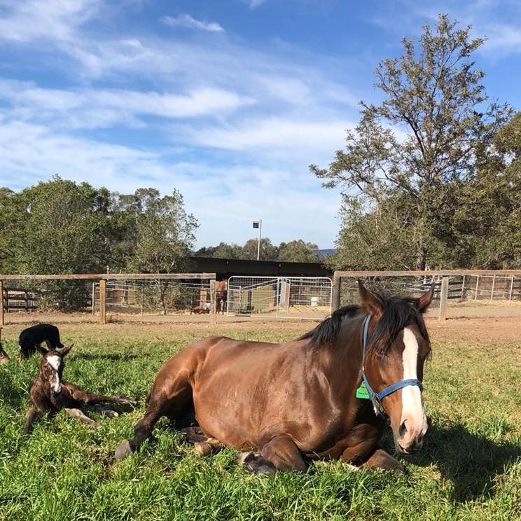 Breeding & Foaling -