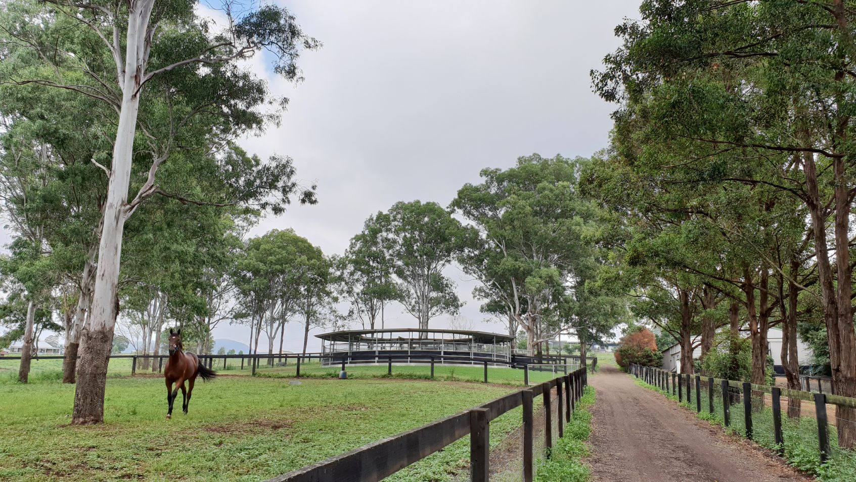 Fairview Park Stud Thoroughbred Agistment Sydney