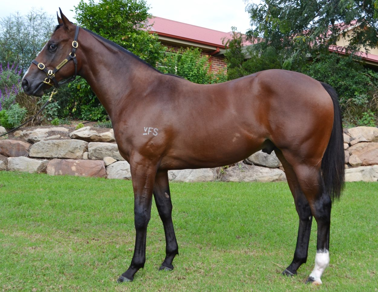 Lot 121 Bay Colt by I Am Invincible out of Miss Fearless