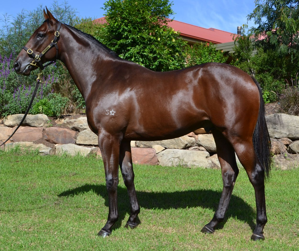 Lot 397 Bay Colt by Deep Field out of Casino Dancer