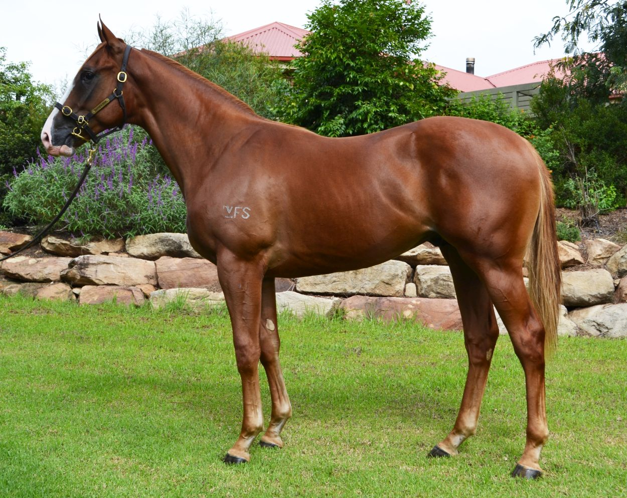 Lot 449 Chestnut Colt by Shooting to Win out of Eye For Fun