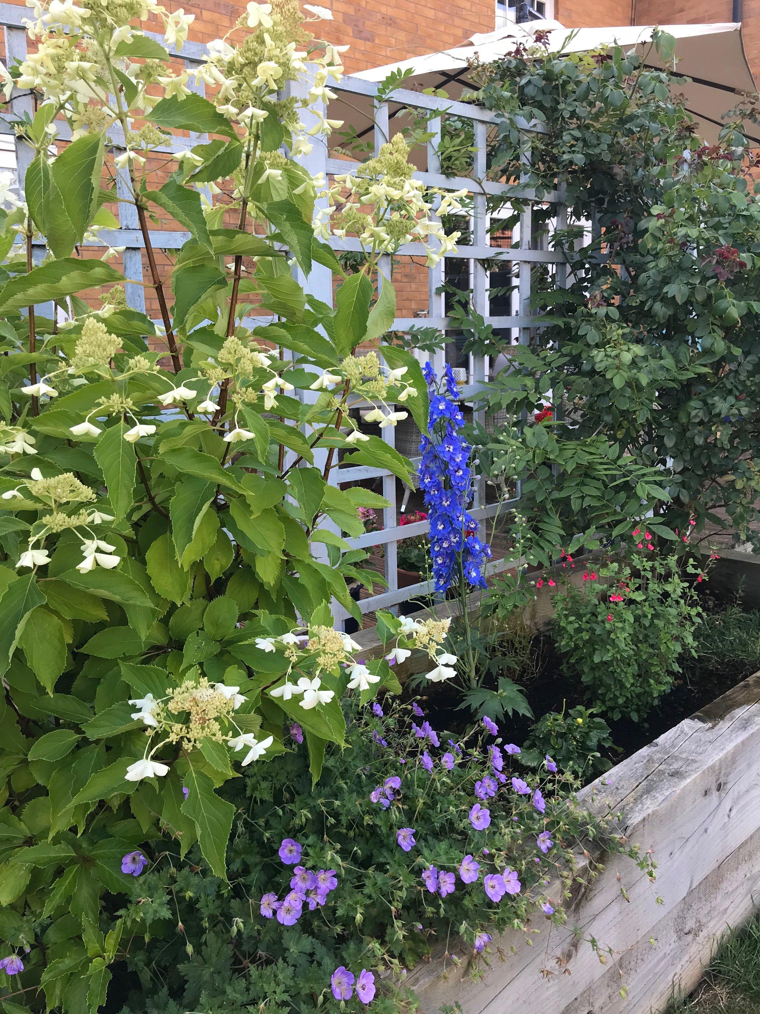 Garden Trellis.jpeg