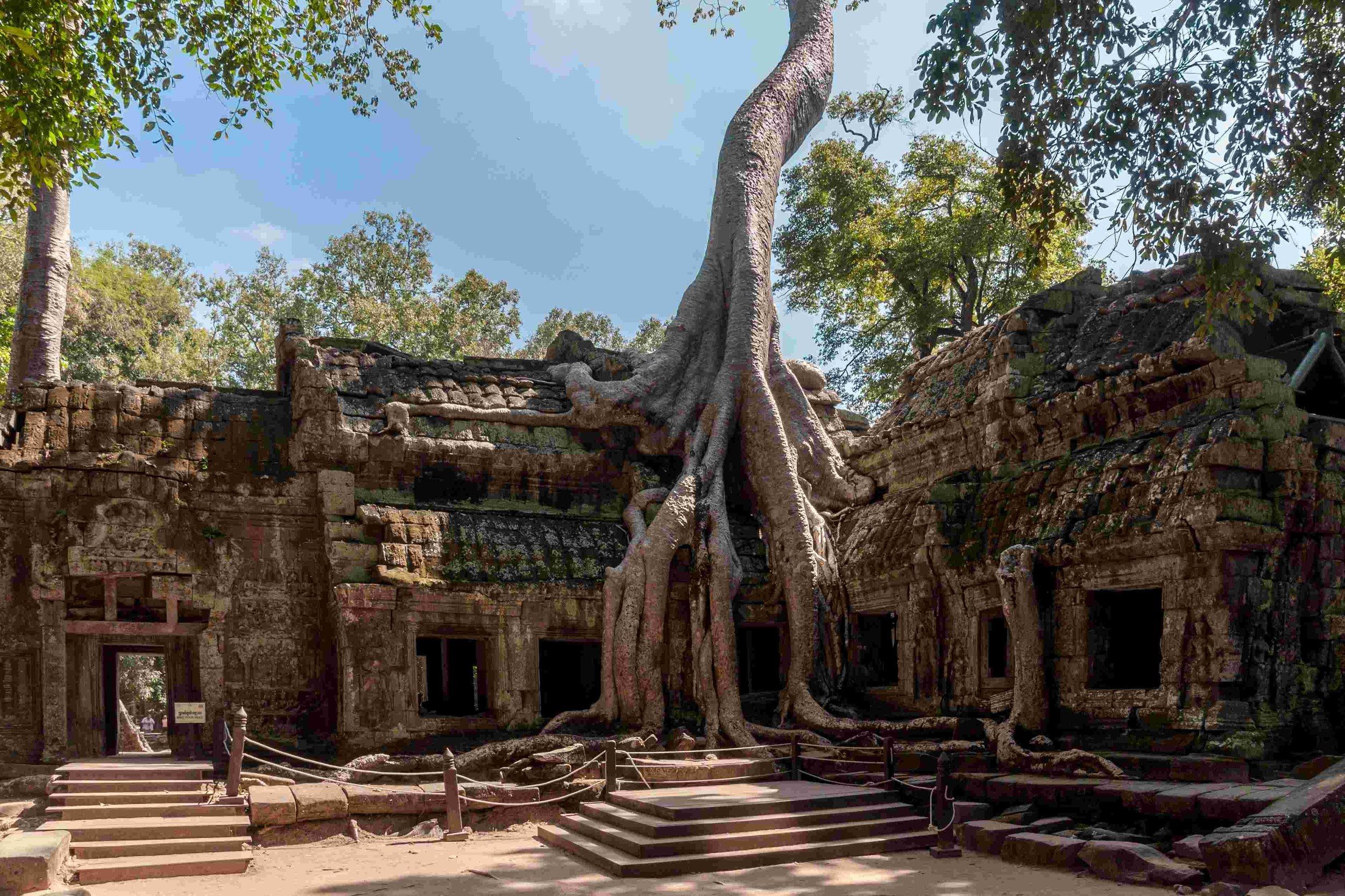 - Ta Prohm Temple, Cambodia.
