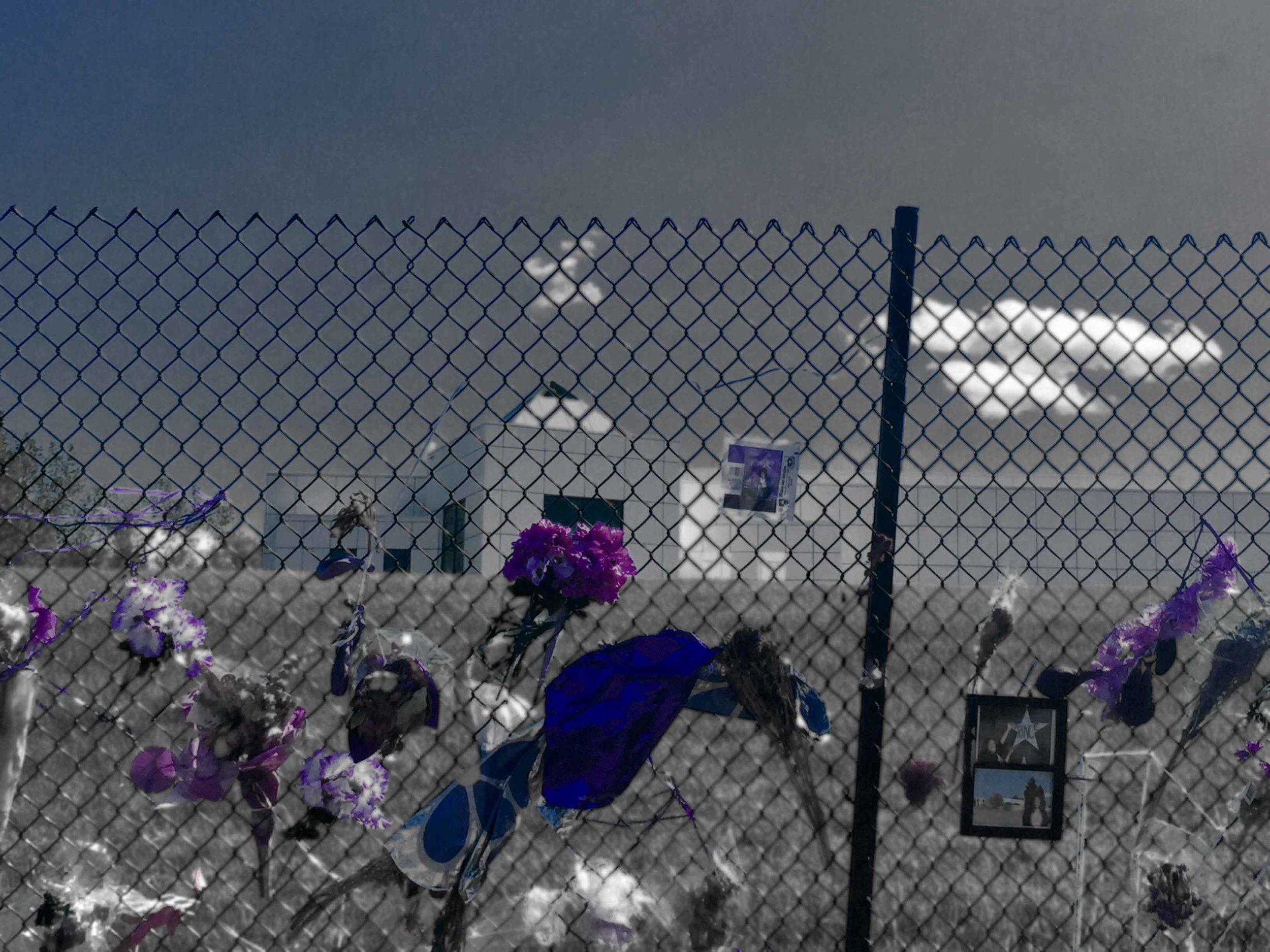 Fence at paisley park. Photo by Doria Di Feo-Muley
