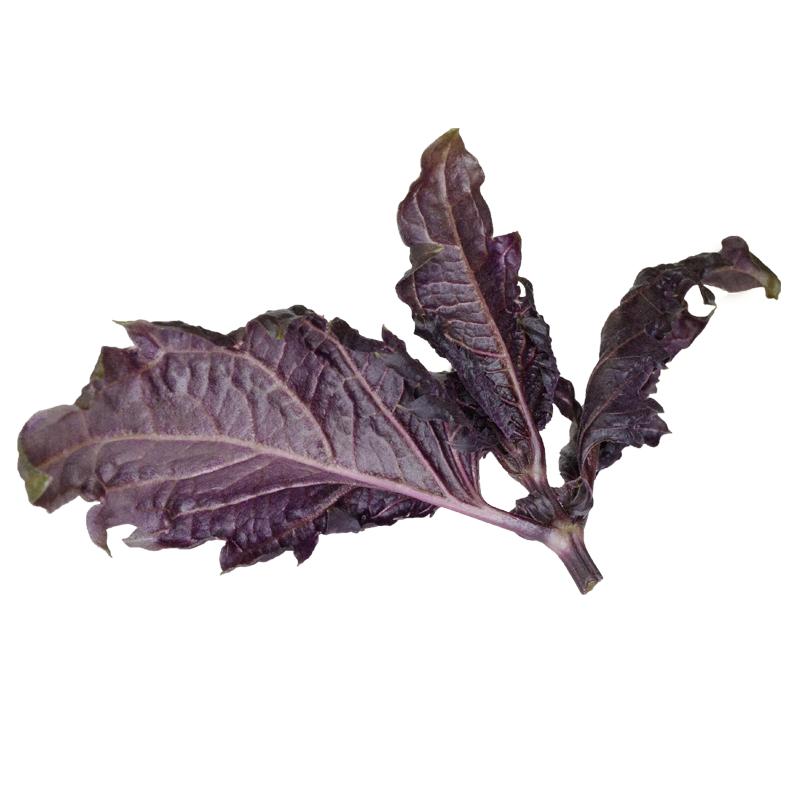 Violetto basilicum