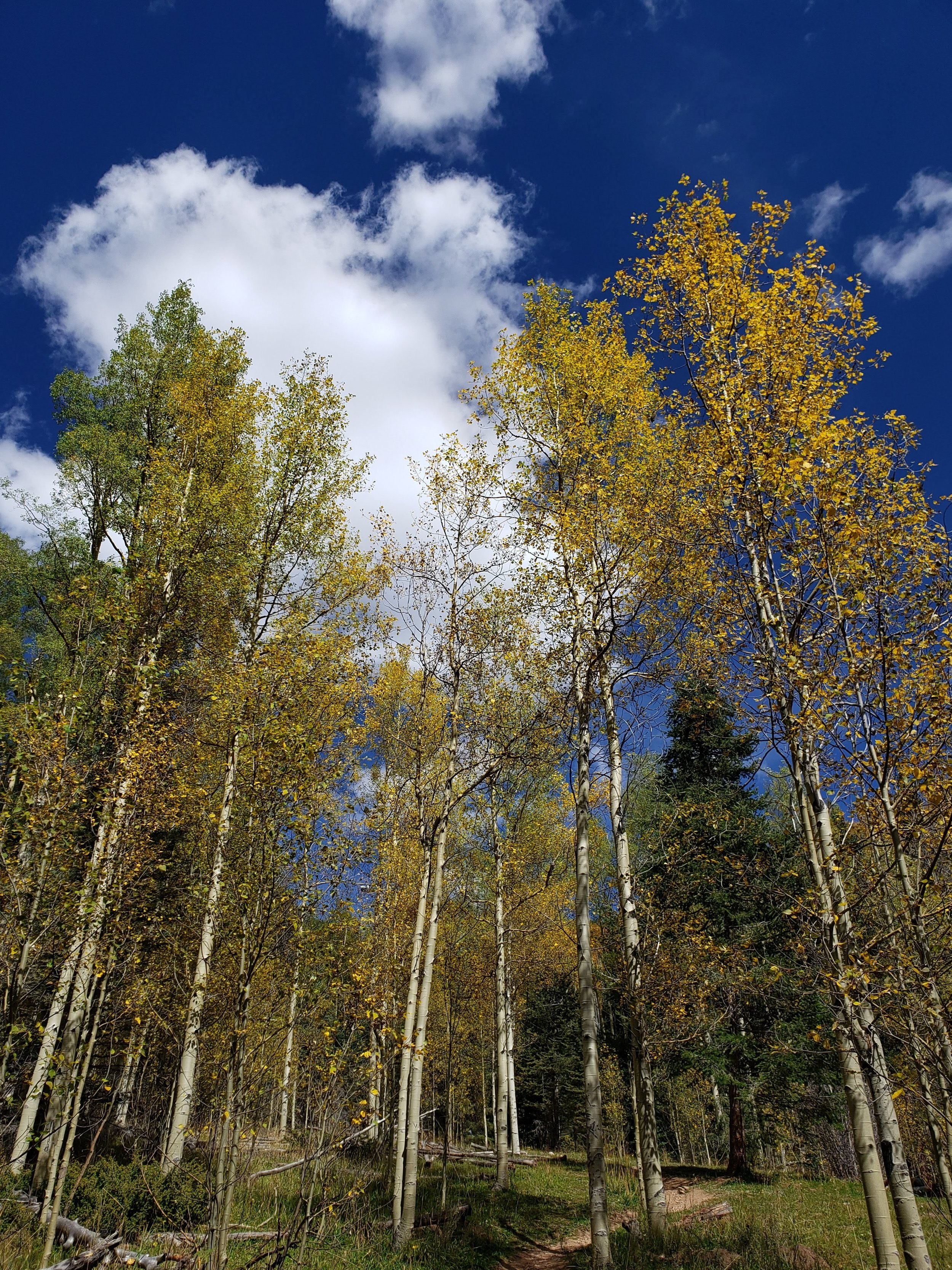 Hiking in Santa Fe National Forest - Aspens
