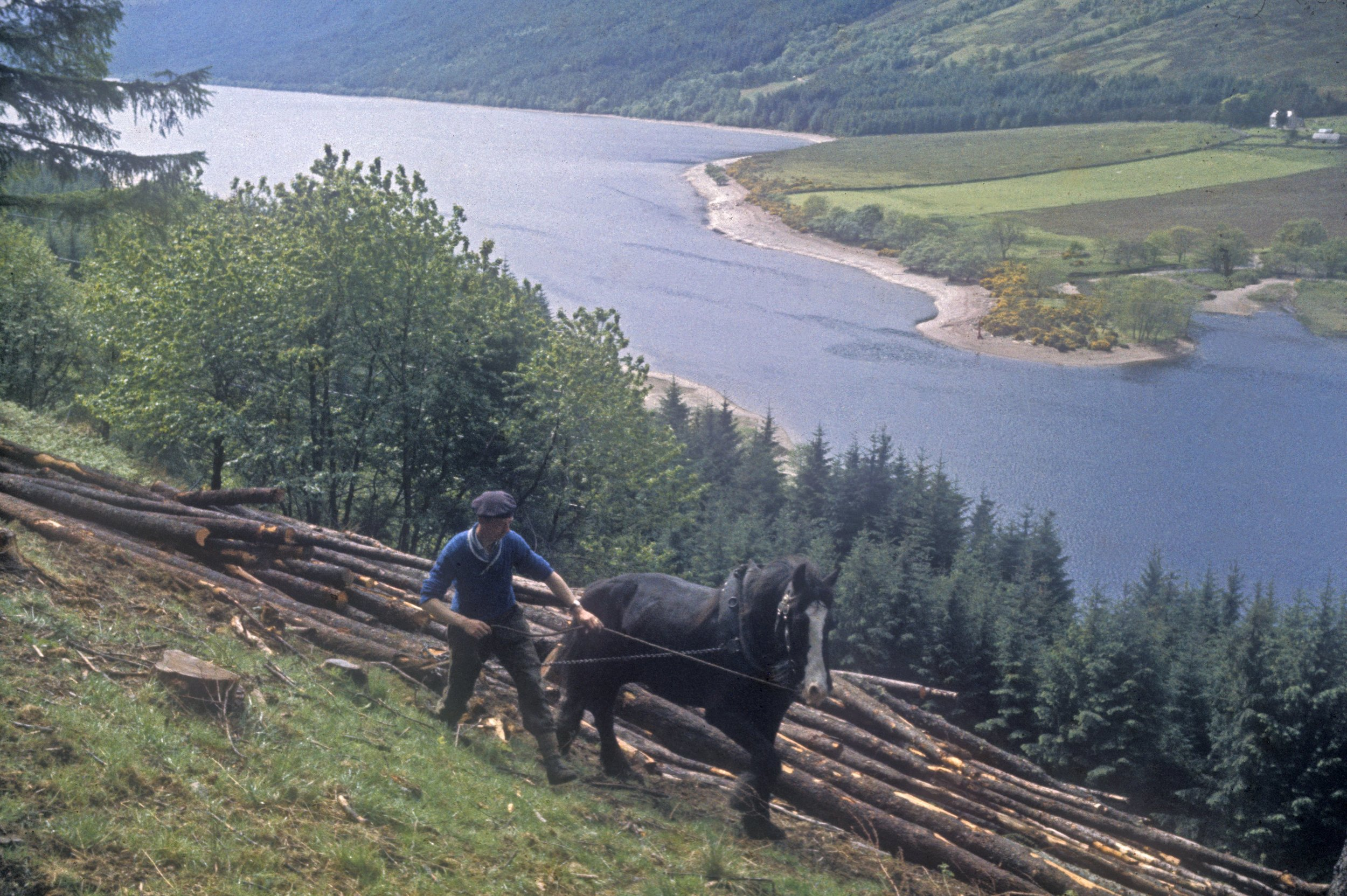 Collecting timber with horses, 1968